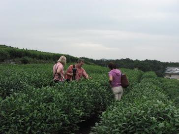 китайский зеленый чай купить