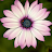 Evaline Ivey avatar image