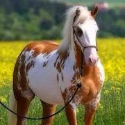 сон лошадь