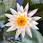 venugopal balla avatar image
