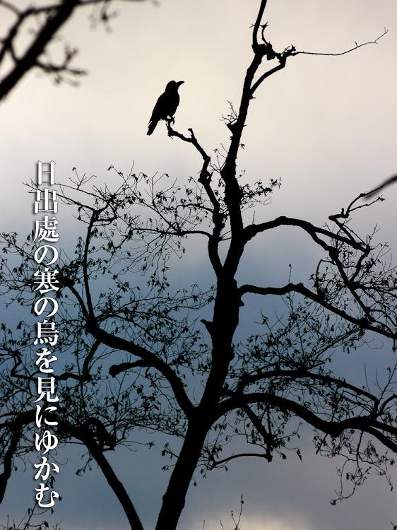 日出処の寒の烏を見にゆかむ