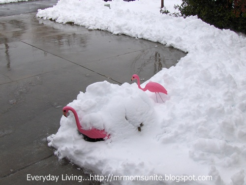 photo of our flamingoes covered in snow