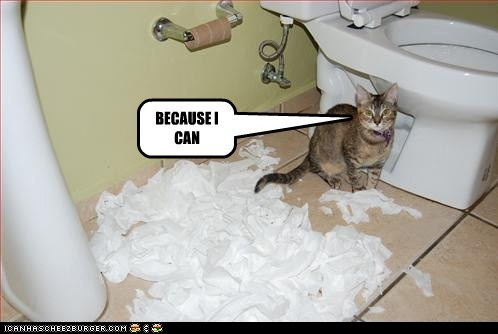 photo of a cat that shredded a whole roll of toilet paper