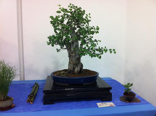 Exposición en Benalmadena IMG_0498