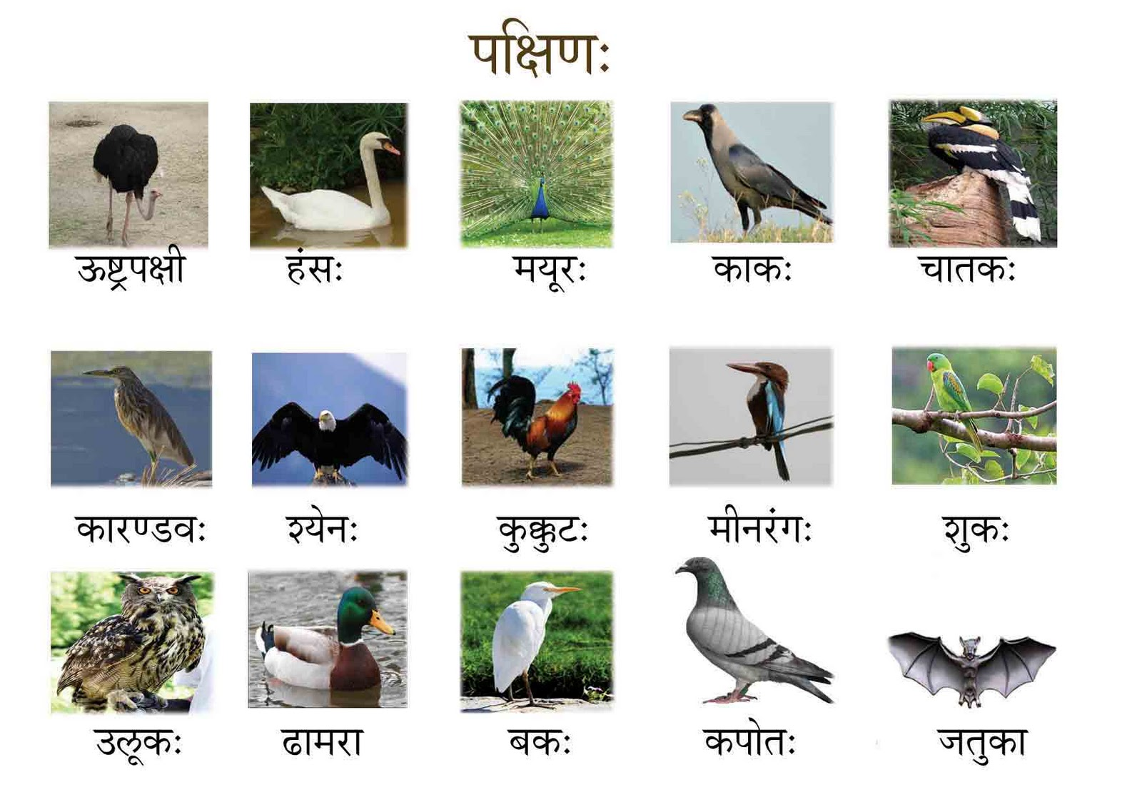 hindi names for 10 birds National symbols of india national symbols of india and their ok want to give the scientific name for some national emblems like tree,bird,flower,fruit.