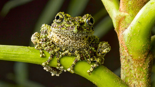 Moss Frog.jpg