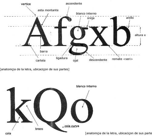 39 dandres valencia tipograf a anatom a de las letras for Ornamental definicion