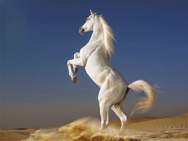 Horse Wallpapers