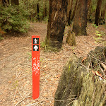 Track marker near German Point Rd in the Watagans (321884)