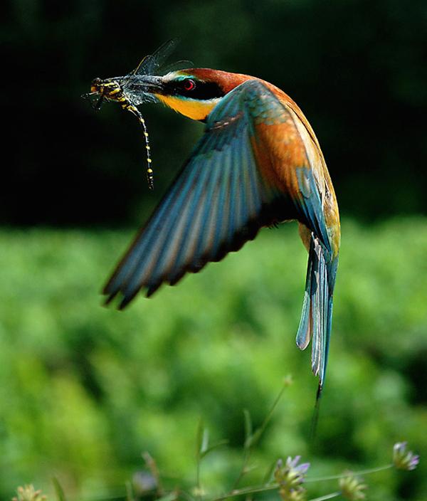Natural Beauty Of Bangladesh