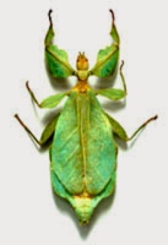 Symmetrical Insects on Bug Insect Activities