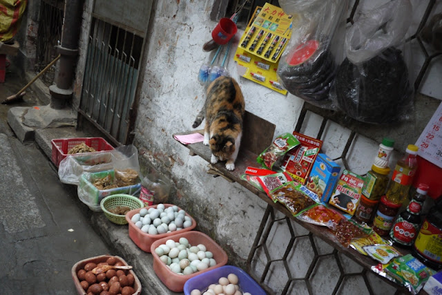 cat in China appearing to look down at items on the ground