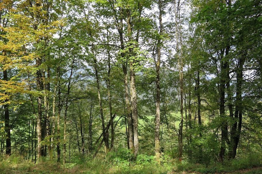 Einst ergab sich vom Berghof ein Panoramablick. Heute ist dort ein Wald
