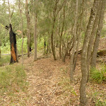 Track in forest near Gap Creek Viewpoint in the Watagans (323024)