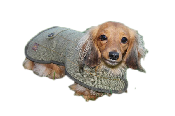 Dachshund Dog Coats