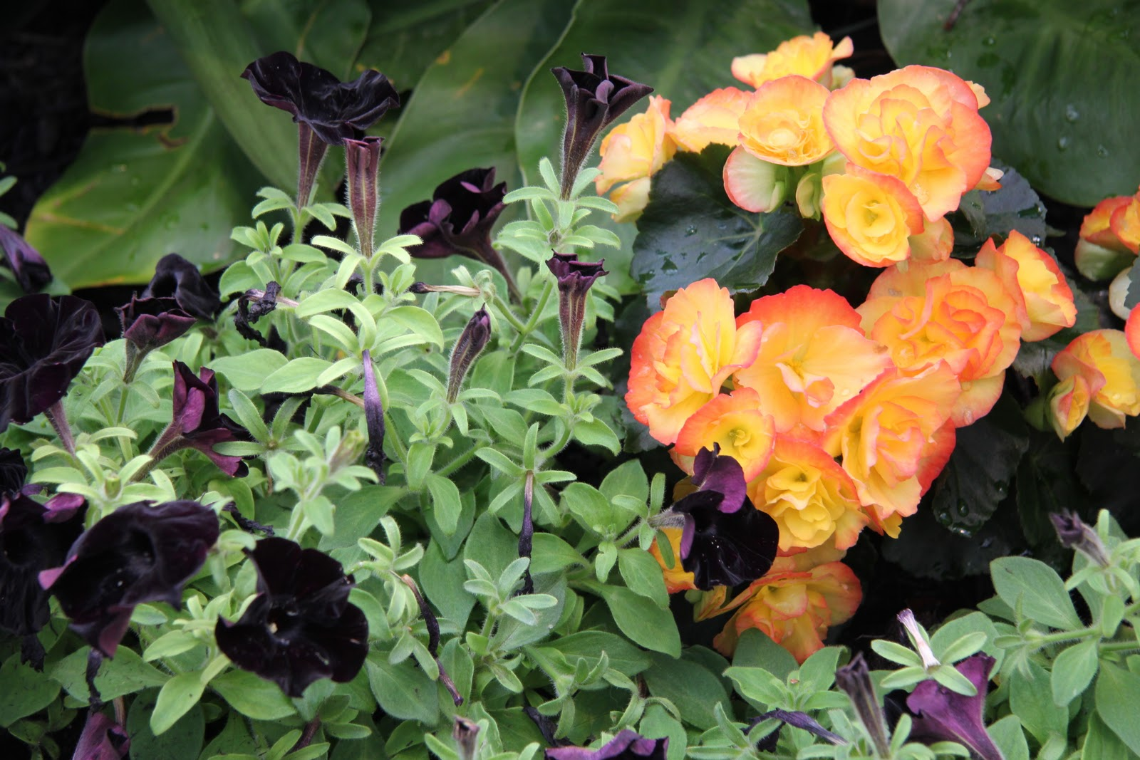 Hicks Nurseries In Westbury, NY Is One Of The Oldest Nursery And Garden  Centers On Long Island. I Love Going There To Just Wander Around The Vast  Array Of ...
