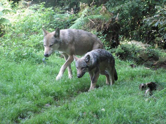 Les Loups de Chabrière PICT0425
