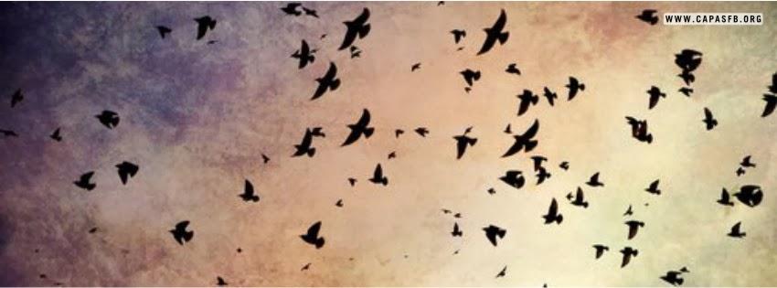 Capas para Facebook Aves no Céu