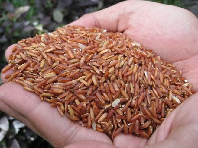 Gạo lứt đỏ Như Châu - Món quà quý giá từ thiên nhiên- Đảm bảo xuất xứ, có ruộng riêng, kháng chịu sâu bệnh tốt
