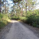 Walking along Lady Carrington Drive (172851)