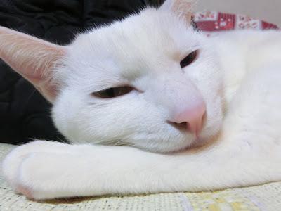 複雑な格好で寝るユキちゃん