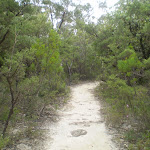 Track down to Lyrebird Lookout (7709)
