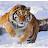 sm kashif avatar image