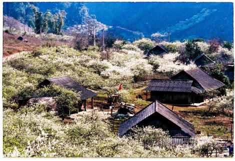 hoa man moc chau pys travel003 001 Mộc Châu mùa xuân   Thiên đường mận trắng
