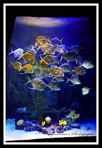 One of the Most Amazing Aquariums  in the Wold (Atlantis-Bahamas)