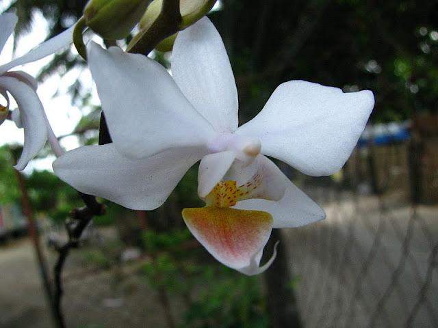 Из зимы в лето. Филиппины 2011 - Страница 4 IMG_0003%252520%2525283%252529