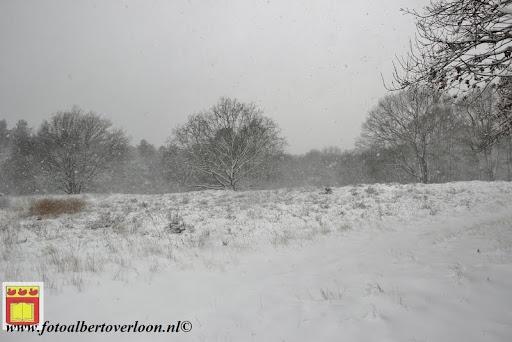 eerste sneeuwval in overloon 07-12-2012  (24).JPG