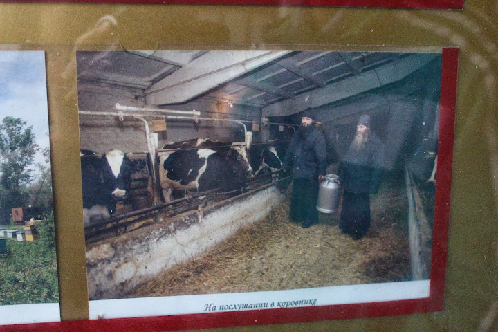 Danilov Monastery monks cows Moscow