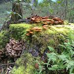 Baumstümpfe sind neuer Lebensraum.