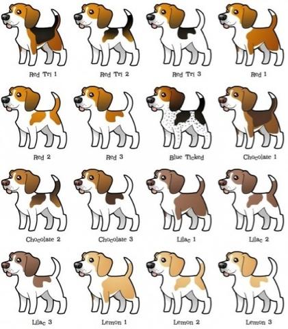 oh que perro!: Beagle, Beagle, Beagle
