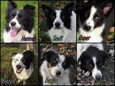 [Image: Roper%2520and%2520Doggies%252011-2012.jpg]