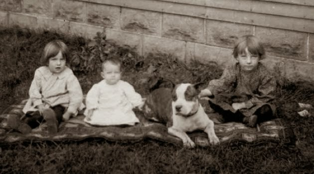 Um Pit Bull com três crianças