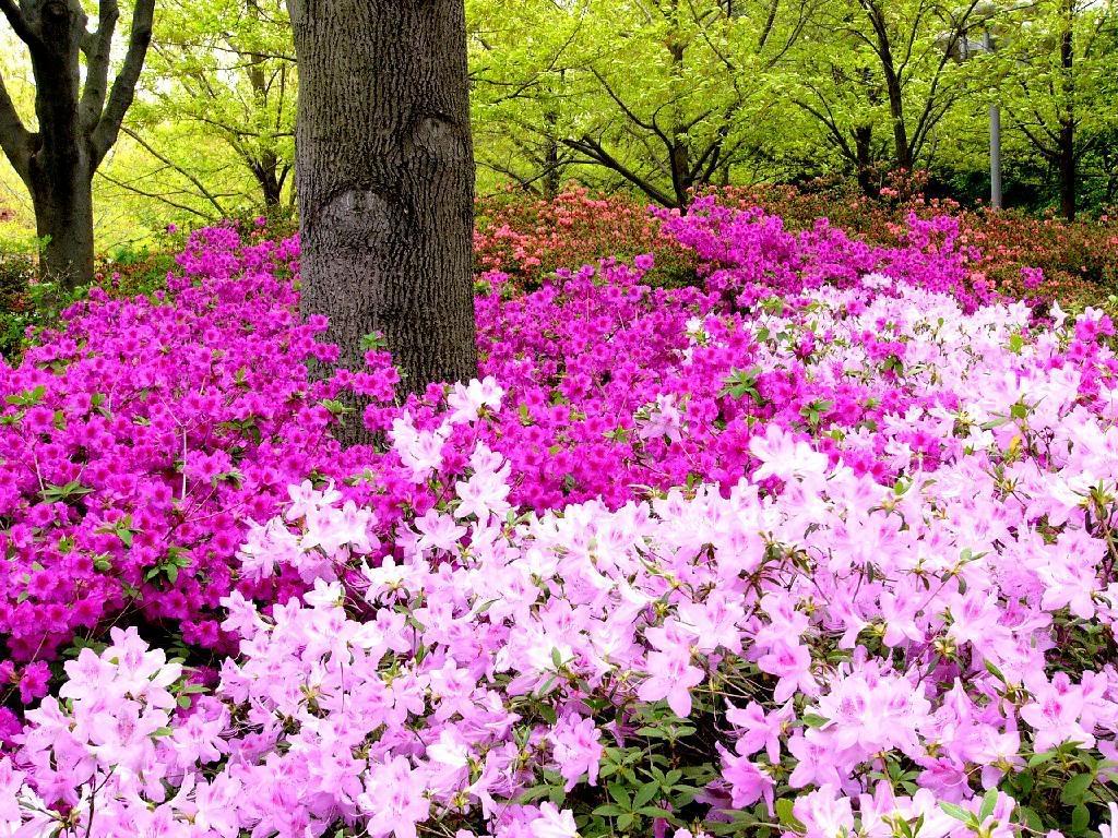 faça um planejamento cromático e tenha seu jardim florido o ano todo