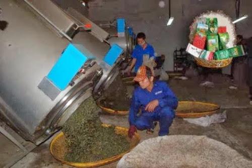 du lich nong nghiep moc chau.5 Du lịch nông nghiệp Mộc Châu, một trải nghiệm mới lạ đầy thú vị