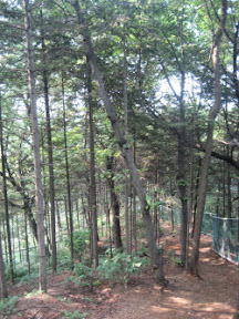 관악산(낙성대) 숲속여행