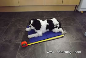 Chillax cooling pad is 50 cm by 40 cm