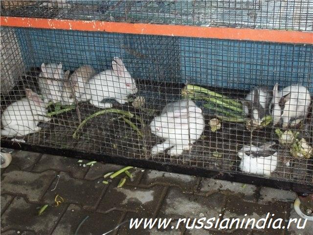 Зоомагазин, кролики