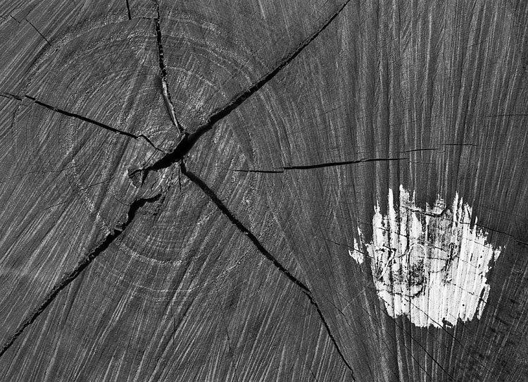 Rachas no centro do tronco e uma pequena marca de tinta sobre a direita