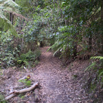 Along the Federal Pass Walking Track (12002)