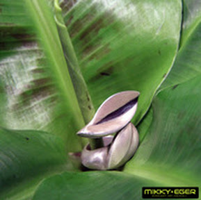 Front view of Leaf silver handmade ring