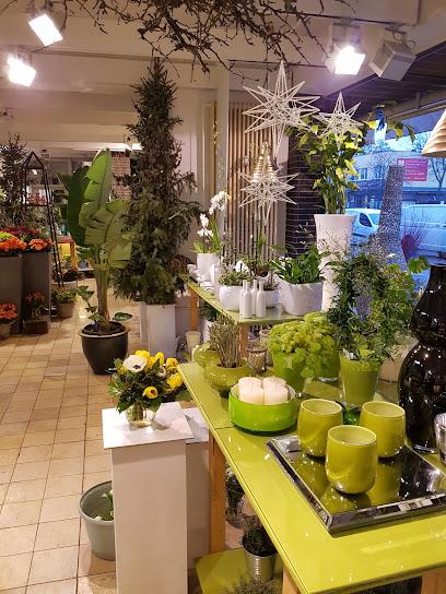 blumen und pflanzen in berlin in vebidoobiz finden. Black Bedroom Furniture Sets. Home Design Ideas