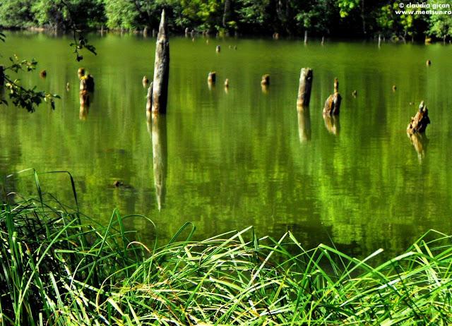 verdele Lac Roşu