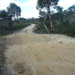 Elvina Track near West Head Rd. (304272)
