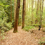 Track to the Pines picnic area in the Watagans (320675)