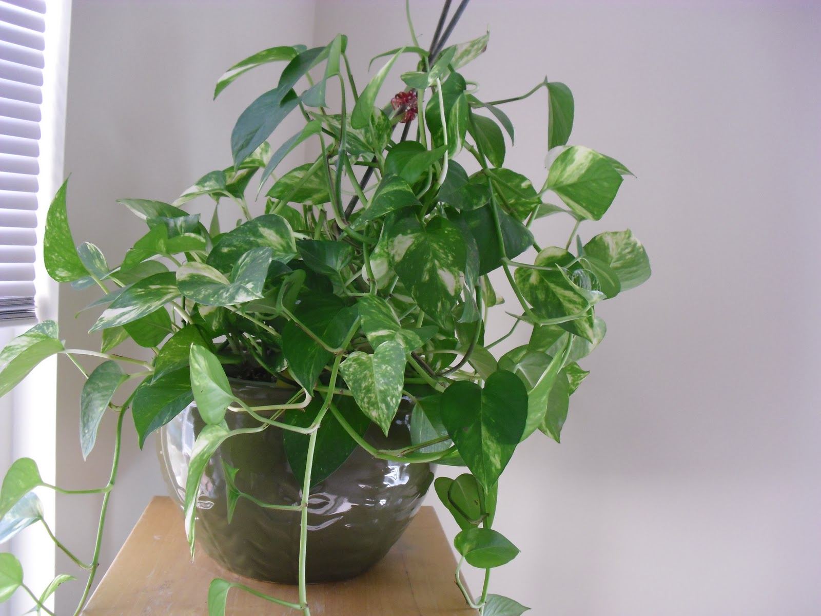 Dia 39 s garden style march 2011 - Five indoor plants that absorb humidity ...