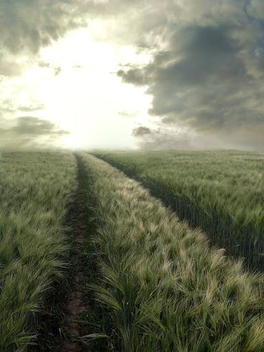 gambar padang rumput